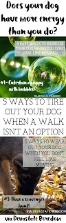 YES genius!  Now I don't have to dread a rainy day with the puppy... *rolls eyes* 5 Easy Ways to Exercise Your Dog When a Walk Isn't an Option - Entertaining a hyper puppy without wearing yourself out in the process! via Devastate Boredom