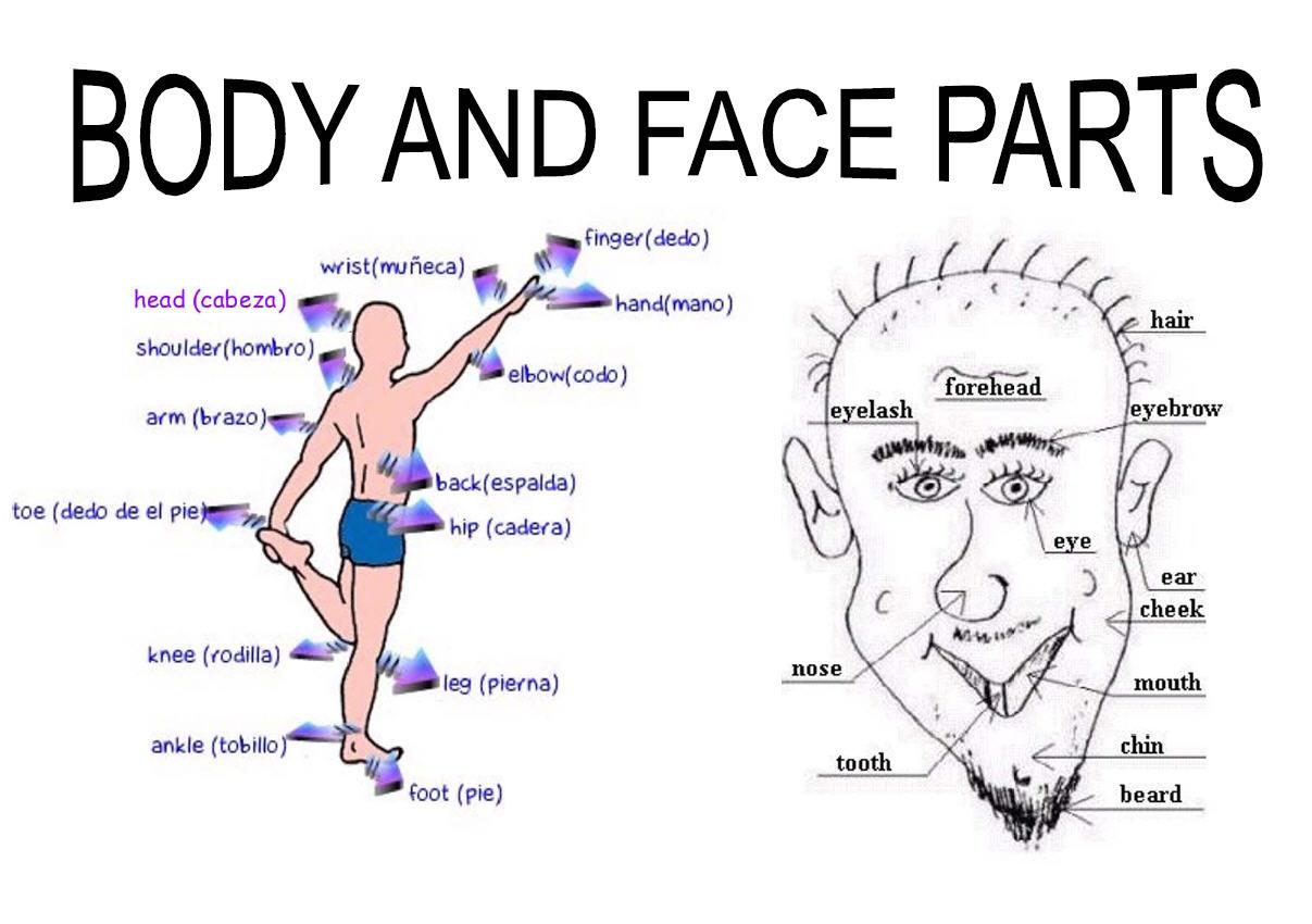 Human Body Ingls T Educacion
