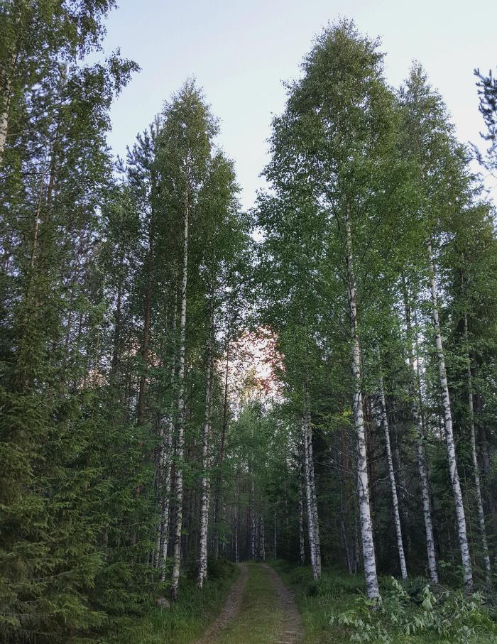 mökkitie Pohjois-Karjalassa