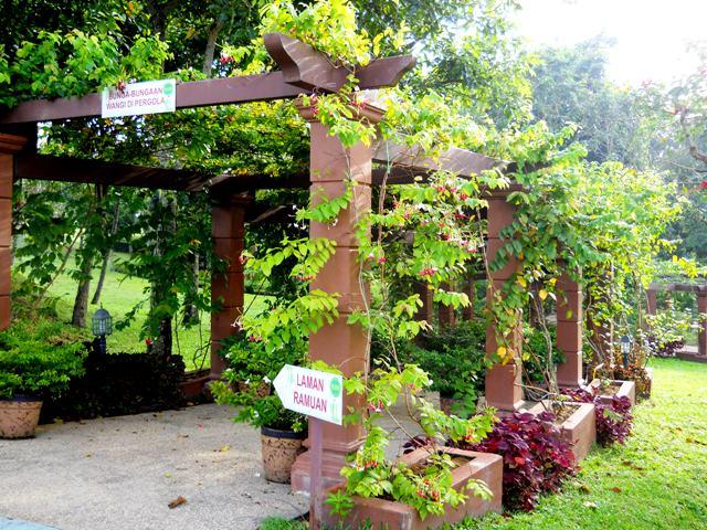 Konsep Taman Ramuan Menitik Beratkan Setiap Pokok Yang Ditanam Boleh Dijadikan Makanan Dan Ubat Ubatan Selain Sebagai Menghias Laman