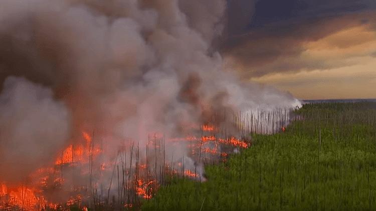 حفل عائلي تسبب بحرق 470 كيلومترا مربعا بأمريكا!