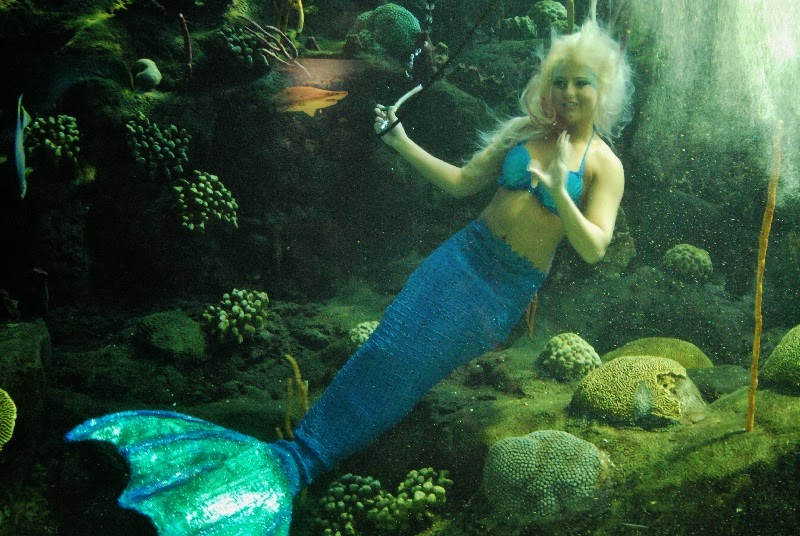 The gallery for --> Real Mermaids Found On Mako Island