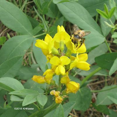 bumblebee on golden banner