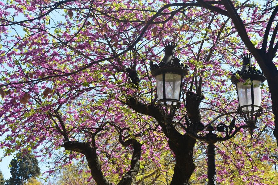 abre fleuri et lampadaire à Barcelone