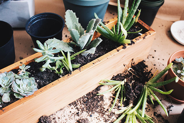 Step 3: Fill with a variety of succulents
