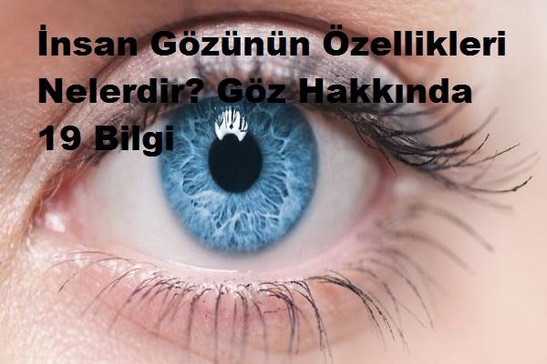 İnsan Gözünün Özellikleri Nelerdir? Göz Hakkında 19 Bilgi