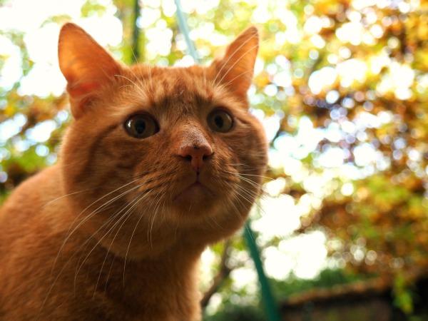 cat rescue woluwe-st-lambert