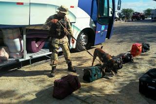 Polícia realiza operação em ônibus