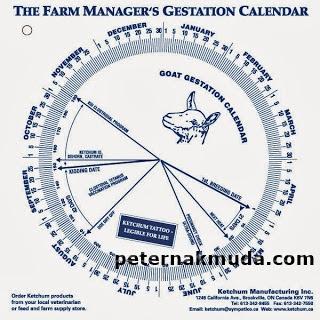 manajemen ternak kambing