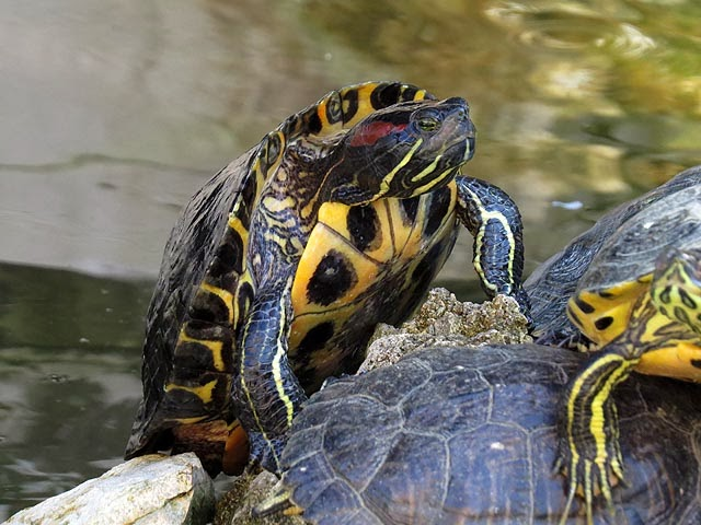 Turtles, fountain of Villa Mimbelli, Livorno