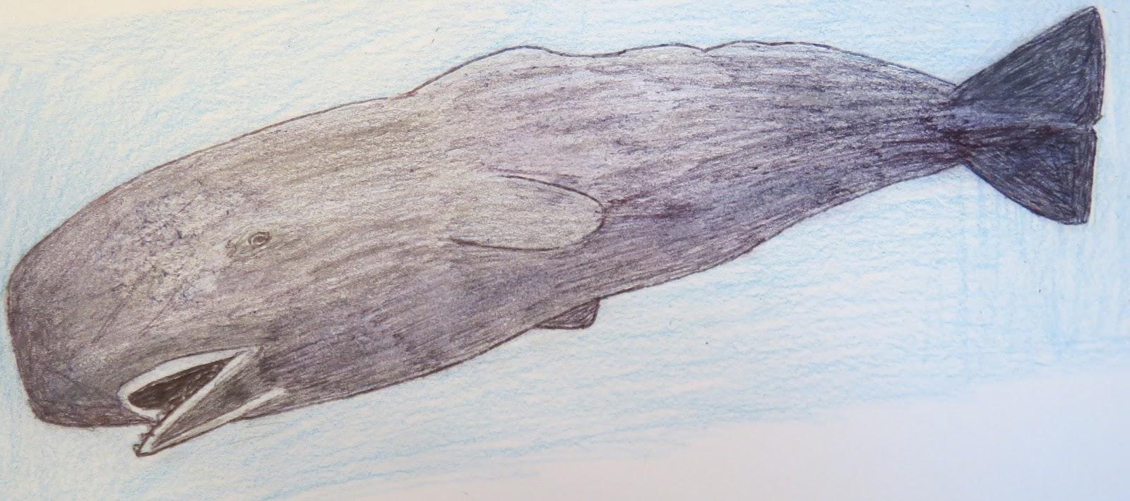 sperm whale Draw