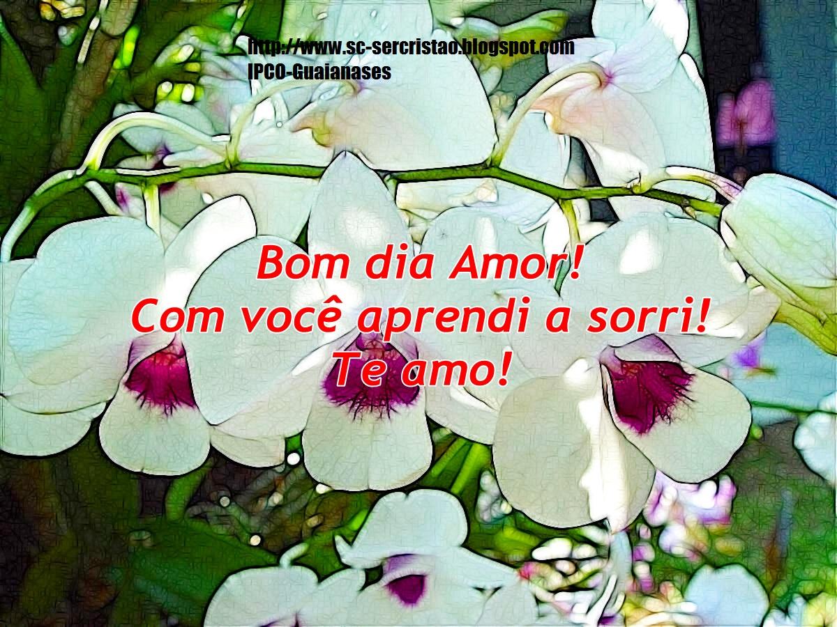 Bom Dia Meu Amor Mensagem Com Flores: Ser Cristão Scraps: Bom Dia Amor