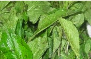 Herbs and You: Scent leaf: Pepper soup ingredient but
