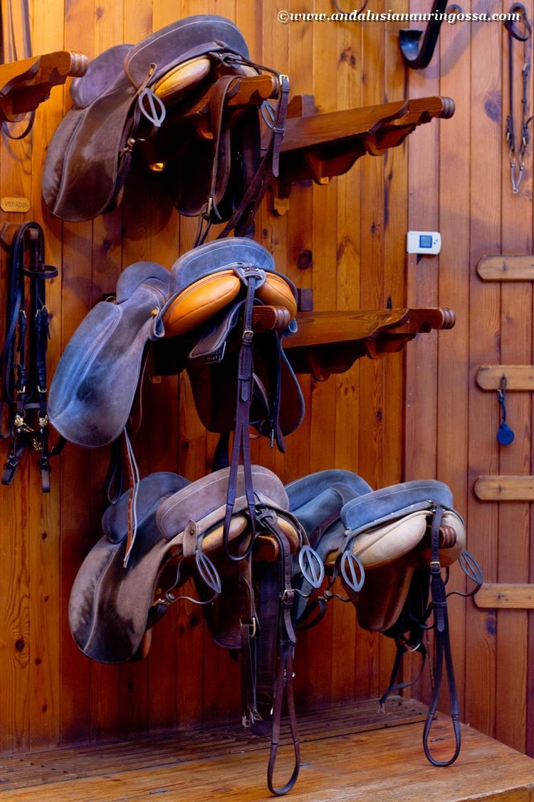 Andalusian kuninkaallinen hevoskoulu Jerez_Andalusian Royal Equestrian School Jerez_14