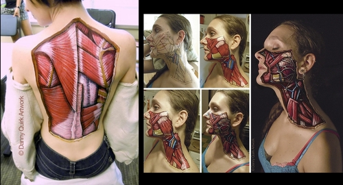 00-Danny-Quirk-Anatomy-Explored-with-Body-Painting-www-designstack-co