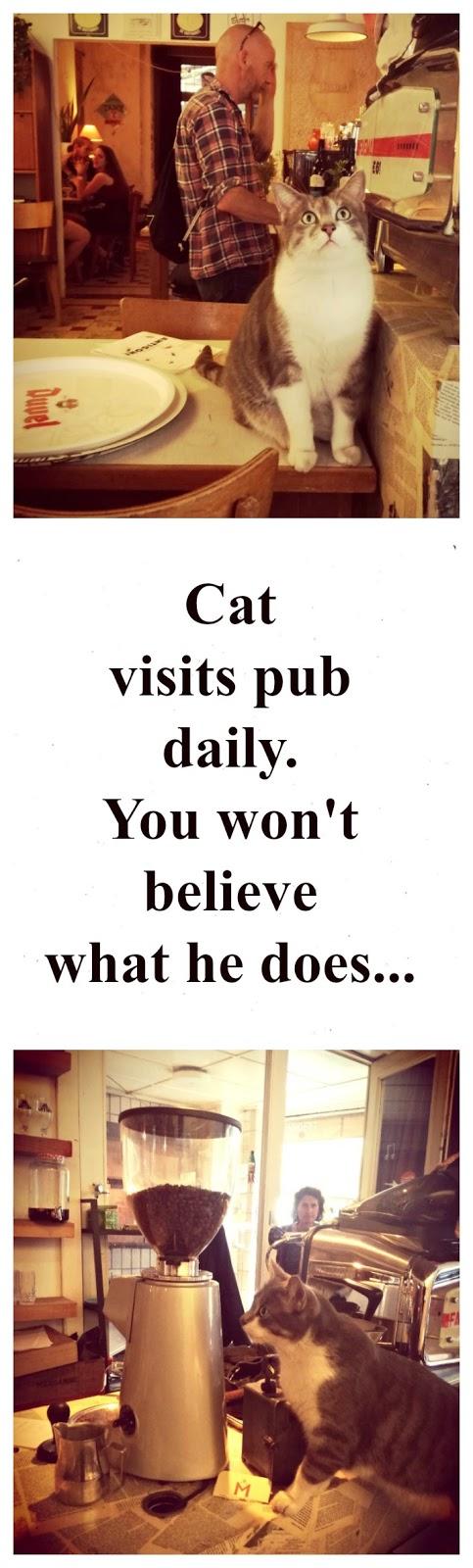 leuke kattenverhalen