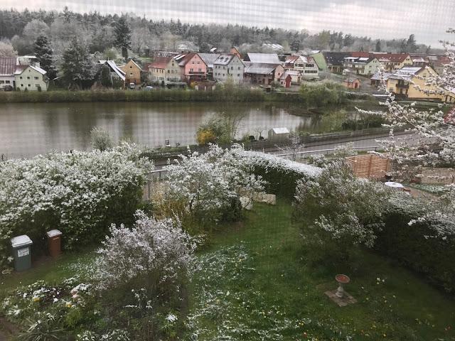 Schnee liegt wie Blütenblätter auf den Sträuchern im Garten (c) by Joachim Wenk