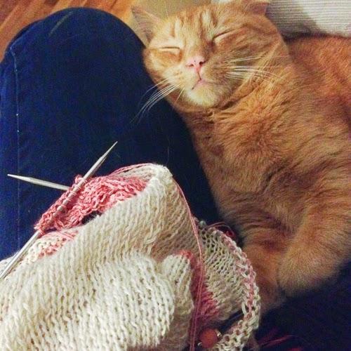 chat pelote dans mon tricot
