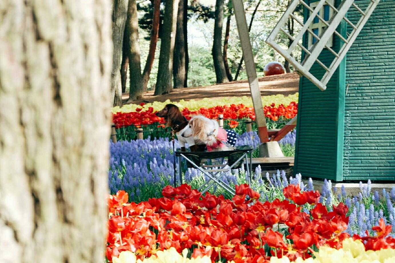 rekomendasi tempat yang wajib didatangi di jepang saat musim semi