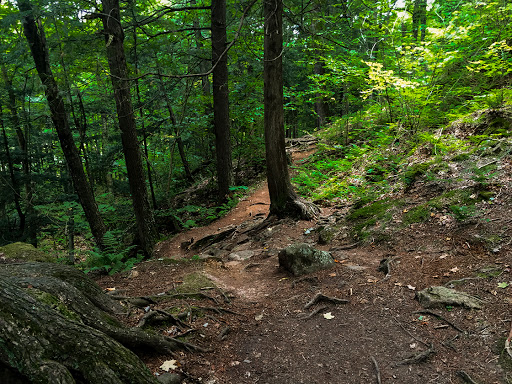 The St. Peter's Dome Hiking Trail passes through maturing second growth forest