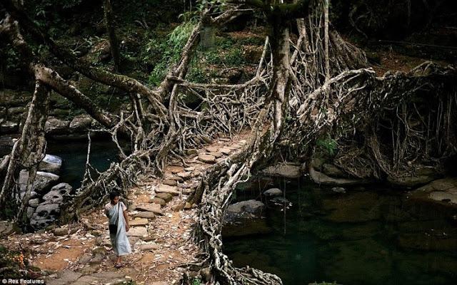 Jembatan Akar Pohon Cherrapunji