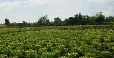 Cara Penyemaian Bibit Sayuran Yang Baik Dan Benar