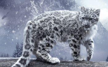 Wallpaper: White King - Snow Leopard