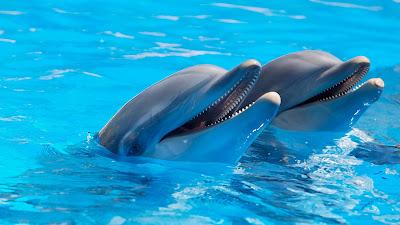 No vayas a espectáculos de delfines. No sonríen: tienen hambre.