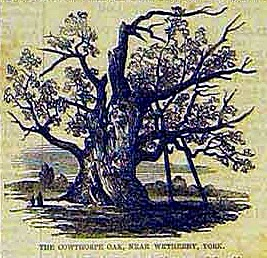 The Cowthorpe Oak The Illustrated London News 1857