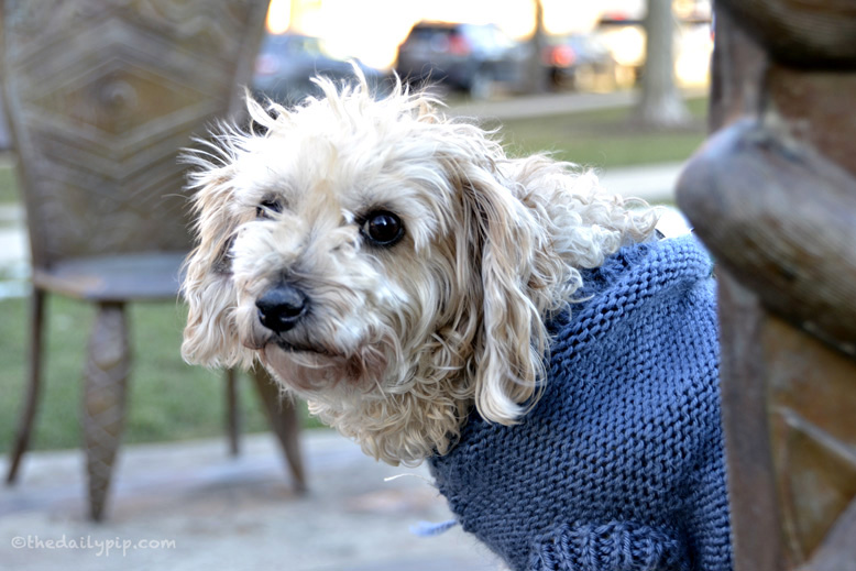 Ruby the rescued Yorkie-Poo checks out Conversations: Here and Now, public art in Evanston