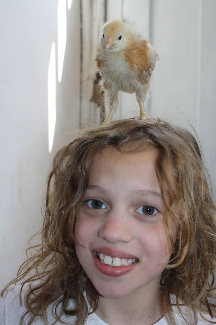 astrid the chicken