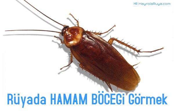 Rüyada Hamam Böceğinin Görülmesi dini ve islami tabiri nedir? Rüyasının yorumları nelerdir?