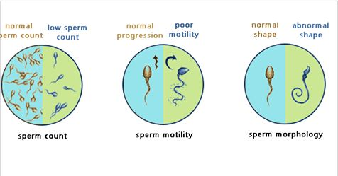How to Increase Your Sperm Count Naturally