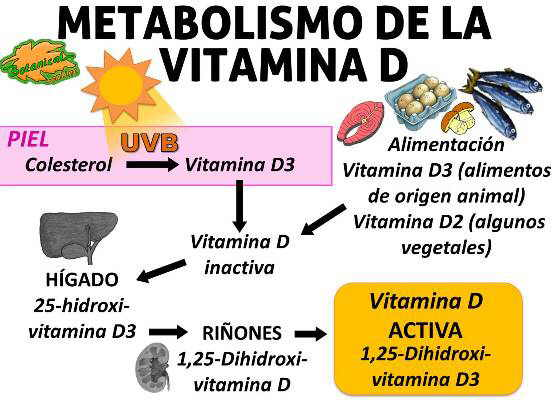La d hidroxi es total que vitamina 25