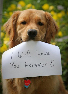 dogs lovers, dogs ladies, dogs will love you forever than cats.