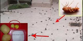 طريقة سهله جدا ستخلصك من الحشرات المزعجة التي قد تسبب لك امراض عديده.