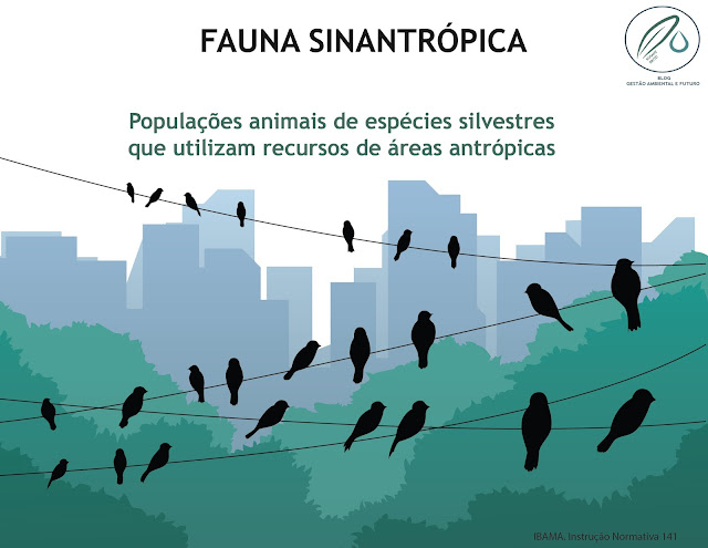 IBAMA fauna