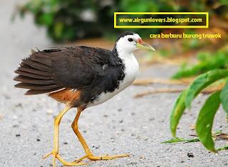 Berburu burung truwok ruak ruak