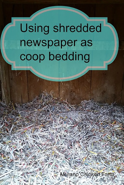 Shredded newspaper, chicken coop