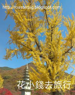 梵魚寺红葉2018