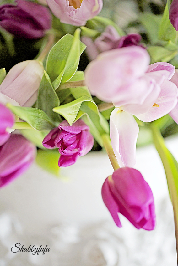pink tulips close up