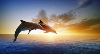 Lovina Beach | Bali Dolphin Tour | Sunia Bali Tour