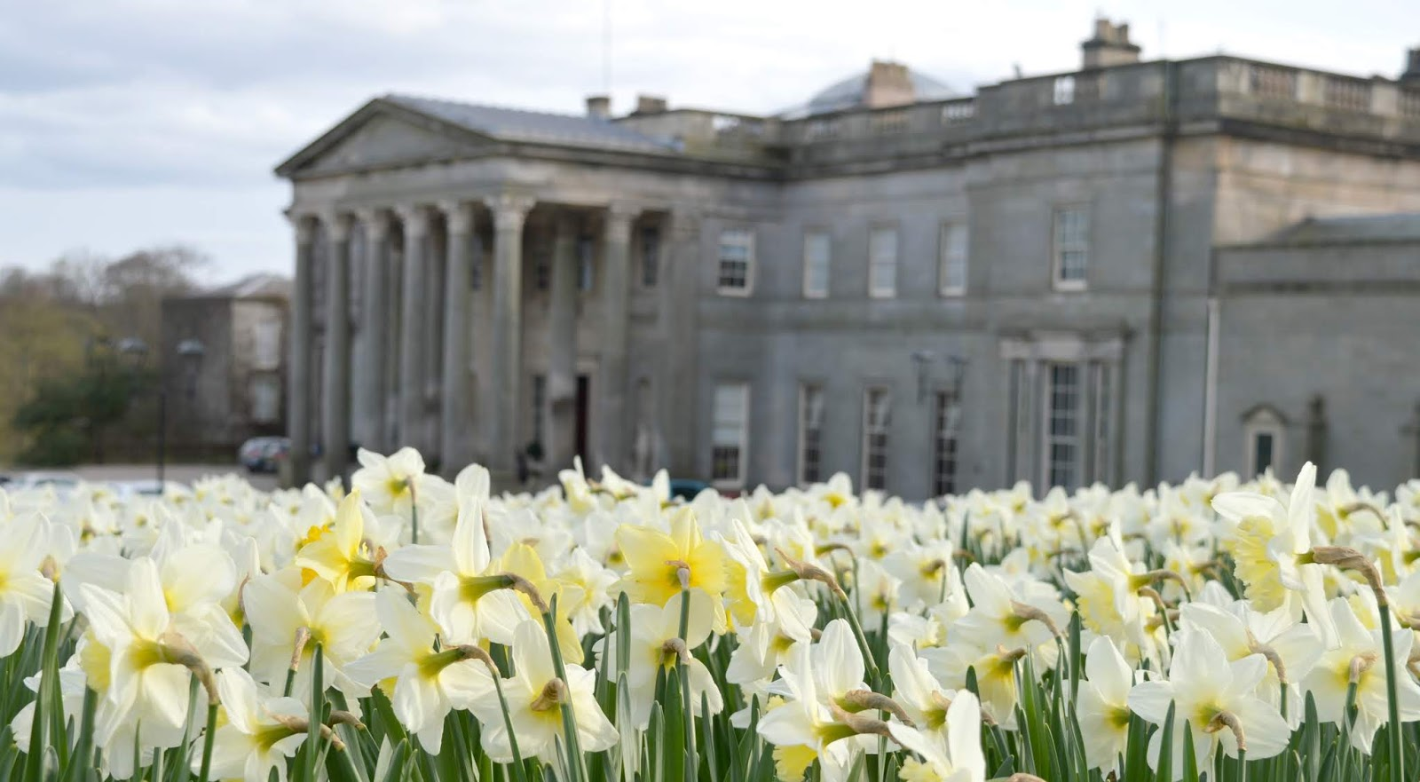 Daffodils at Wynyard Hall