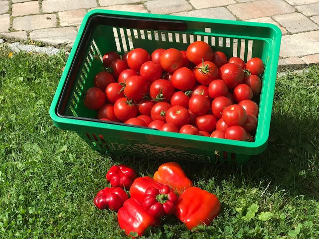 Tomaten und Paprika Ernte (c) by Joachim Wenk