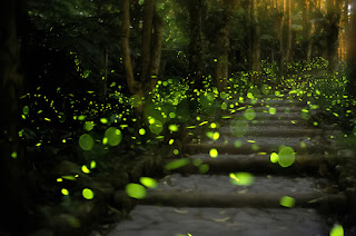 Firefly pathway