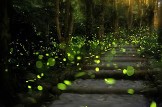 Firefly pathway