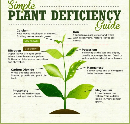 Credit Twitter Jskproperty Plant Deficiency Guide Some Possible Problems Because Of Nutrient Or Even Too Much Any One