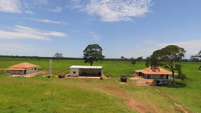 fazenda em pecuária