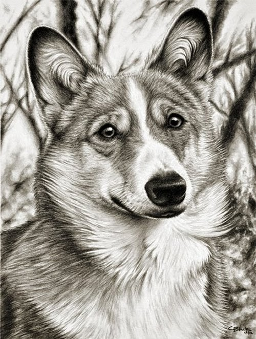 06-Charles-Black-Hyper-Realistic-Pencil-Drawings-of-Dogs-www-designstack-co