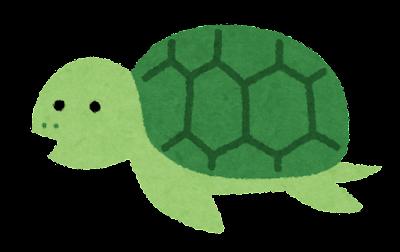 亀の親子のイラスト(親亀)